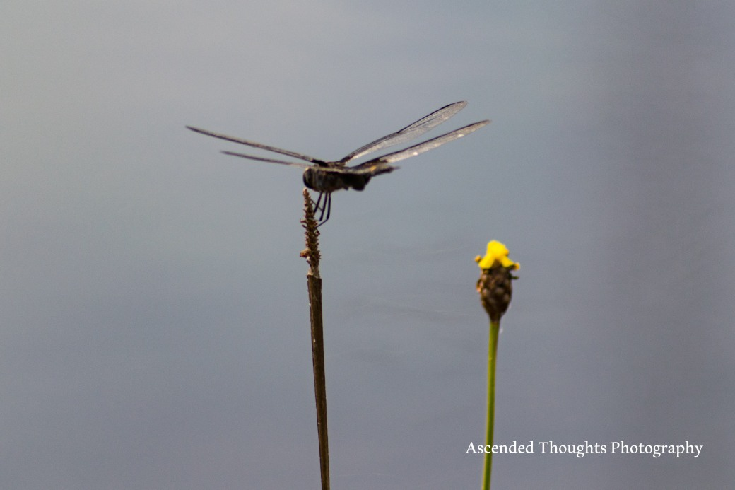 Dragon Fly 8Logo