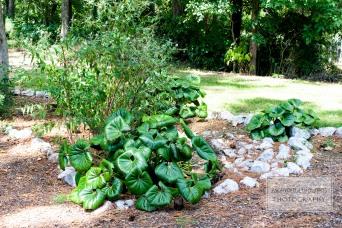 Lovely Garden Plants 1 WM