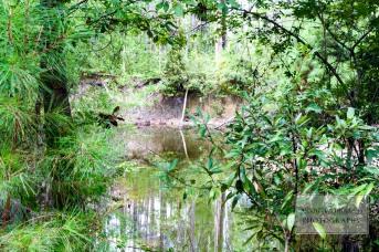 Pond at Entrance WM